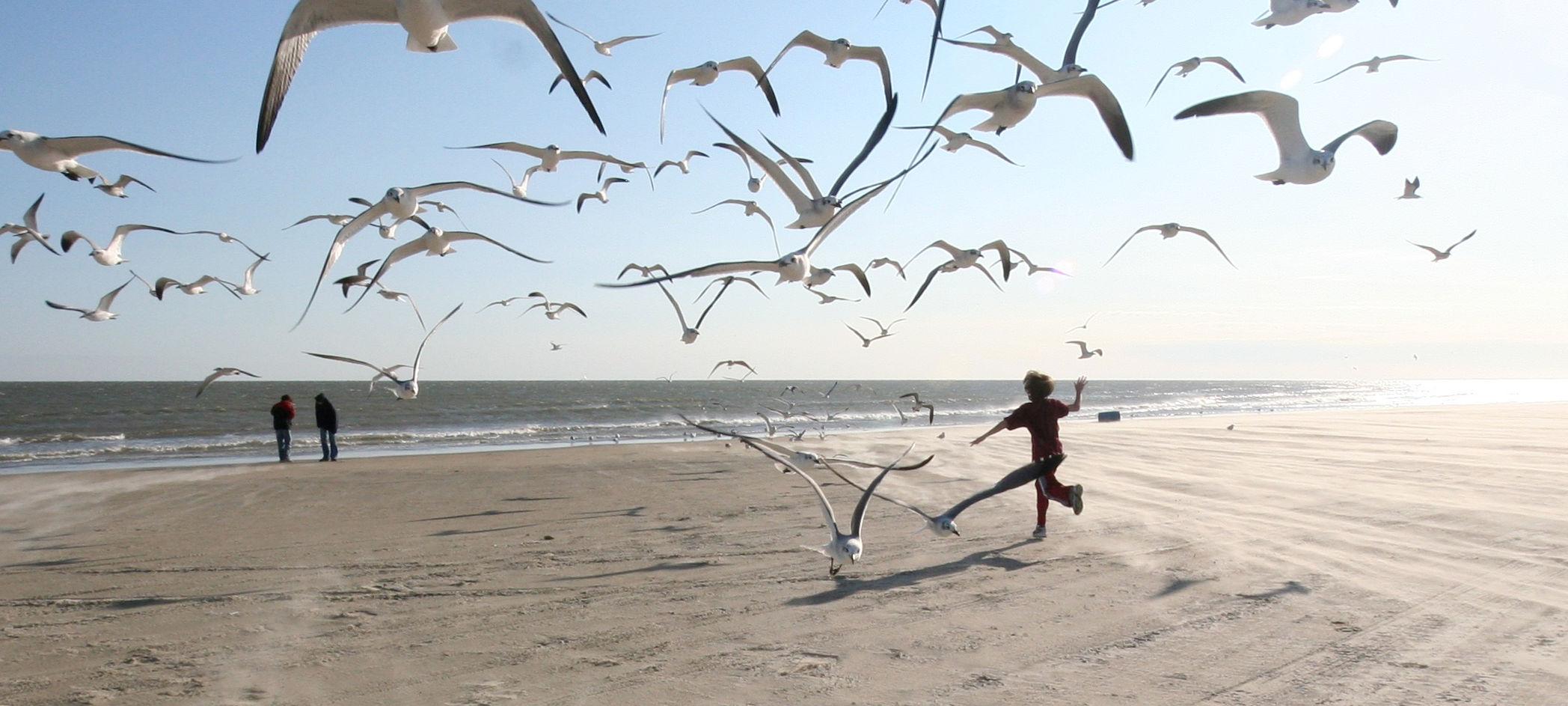 Flock_of_Seagulls_eschipul_compressed